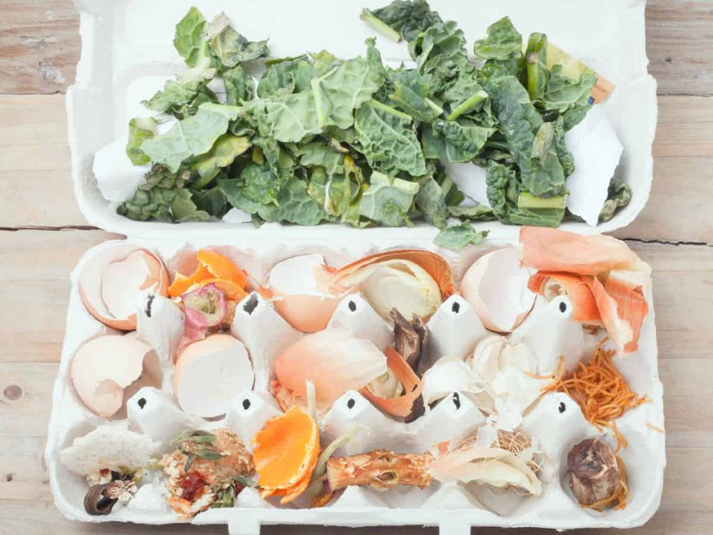 Egg carton with shells, kale, and orange peels inside