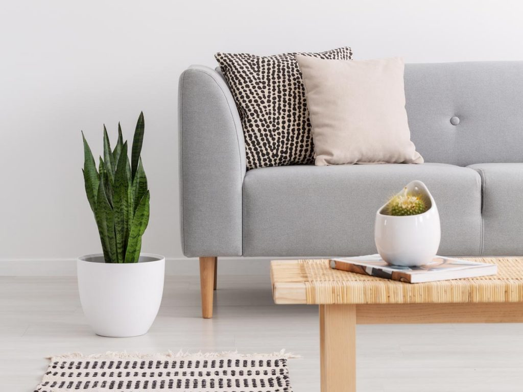 Grey couch with black and white throw pillows, wooden table with cactus, and green plant in white pot