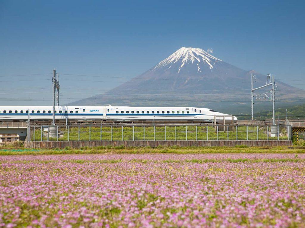 Japan bullet train traveling between pink flower field and Mt. Fuji.